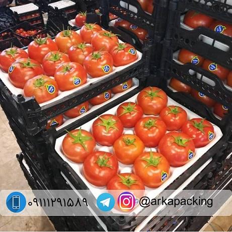 شانه میوه فومی گوجه