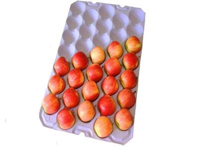 عرضه کننده شانه میوه فومی